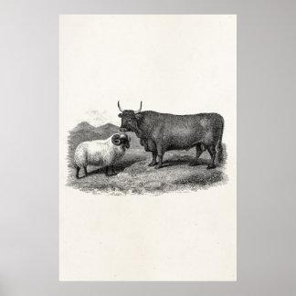 Granja retra del ejemplo de las ovejas de Bull de  Impresiones