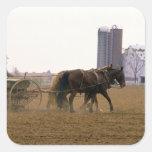 Granjero de Amish que usa un plantador traído por Pegatina Cuadrada