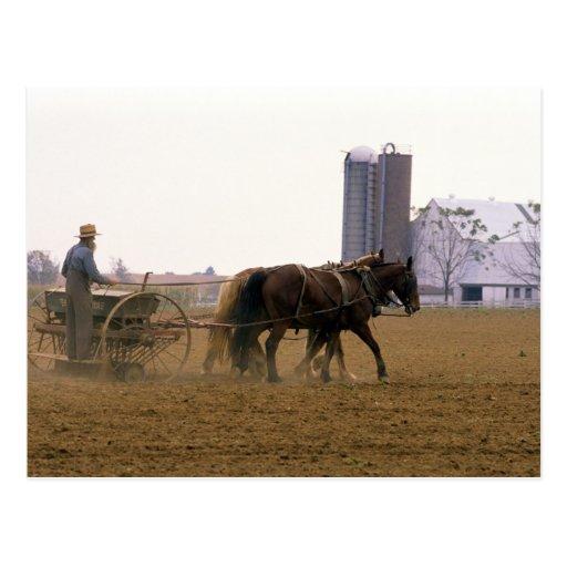Granjero de Amish que usa un plantador traído por Postal