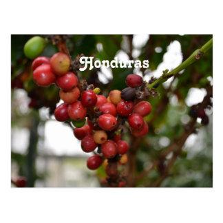 Granos de café de Honduras Tarjetas Postales