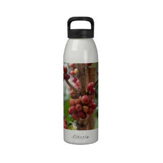 Granos de café de Papúa Nueva Guinea Botallas De Agua