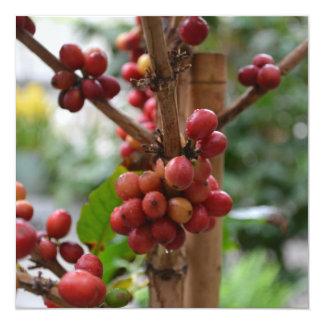 """Granos de café de Papúa Nueva Guinea Invitación 5.25"""" X 5.25"""""""