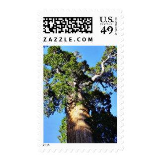 Grant Trees Sequoias Bark Branches Postage