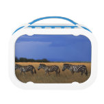 Grant Zebra 2 Lunchbox