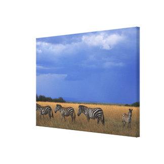 Grant Zebra 3 Canvas Prints