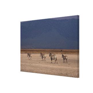 Grant Zebra 4 Gallery Wrap Canvas