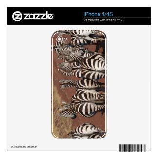 Grant Zebra 4 iPhone 4 Skins