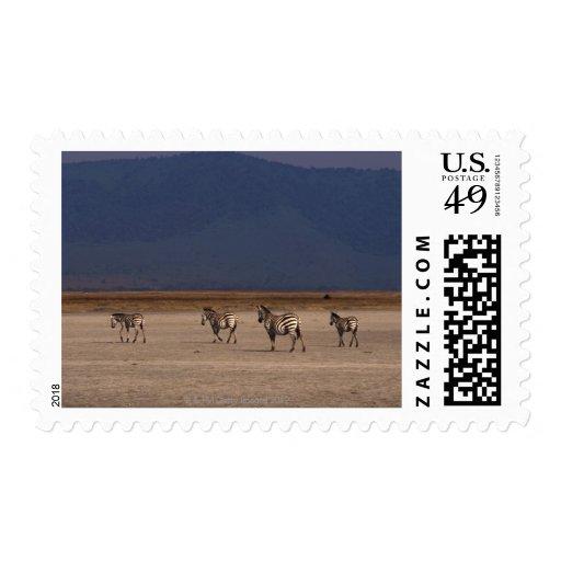 Grant Zebra 4 Stamps
