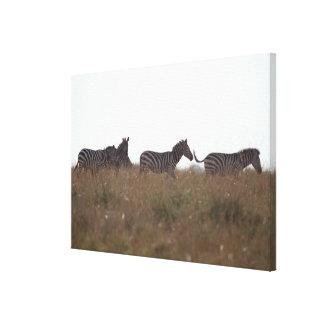 Grant Zebra 7 Gallery Wrap Canvas