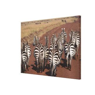 Grant Zebra Canvas Print