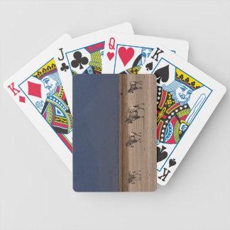 Grant Zebra Card Decks