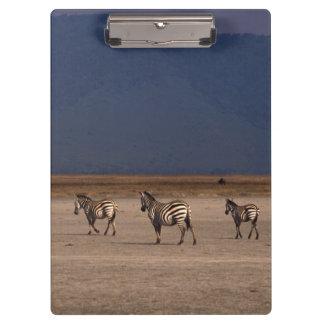 Grant Zebra Clipboards