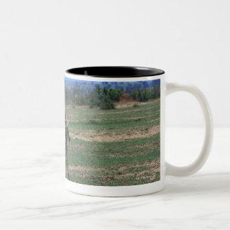 Grant Zebra Coffee Mugs