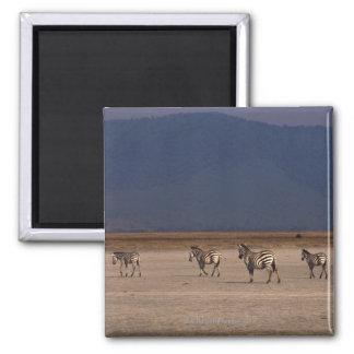 Grant Zebra Fridge Magnet