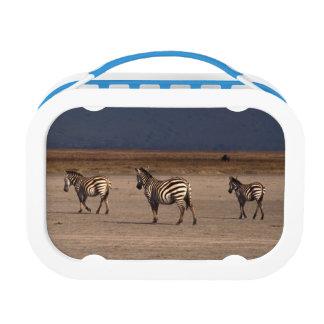 Grant Zebra Lunchbox