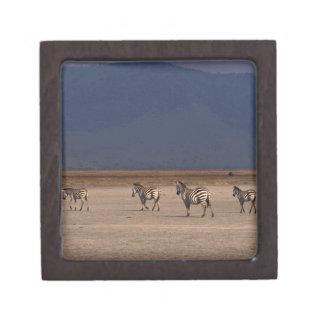 Grant Zebra Premium Gift Boxes