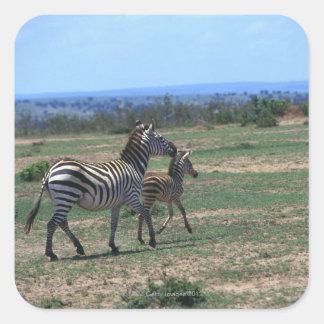 Grant Zebra Square Stickers