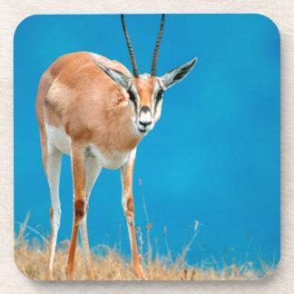 Grant's Gazelle (Gazella Granti) Ewe Portrait Coaster