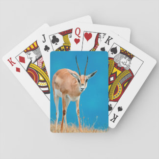 Grant's Gazelle (Gazella Granti) Ewe Portrait Card Decks