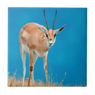 Grant's Gazelle (Gazella Granti) Ewe Portrait Tile