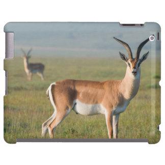 Grant's Gazelle, Ngorongoro Crater, Ngorongoro