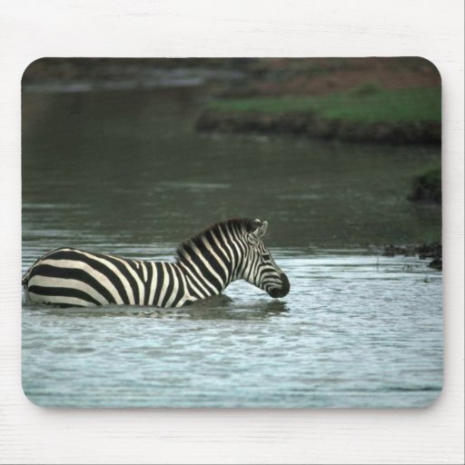 Grant's Zebra - Crossing Mouse Pad