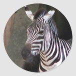 grants zebra stickers