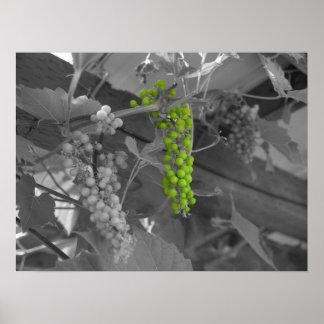 Grape Arbor Poster