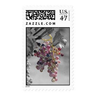 Grape Cluster Postage