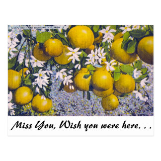 Grape Fruit and Blossoms in Florida Post Card