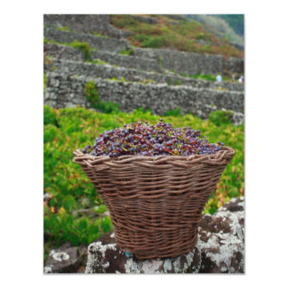 Grape harvest card