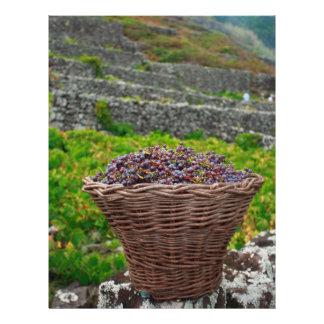 Grape harvest flyer