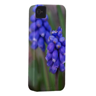 Grape hyacinth Blackberry Bold case