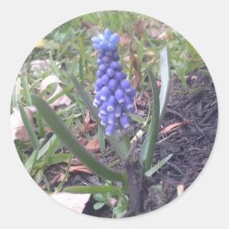 Grape Hyacinth Blossom Photography Classic Round Sticker