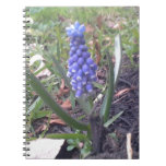 Grape Hyacinth Blossom Photography Note Book