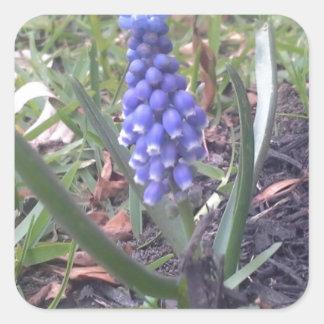 Grape Hyacinth Blossom Photography Square Sticker