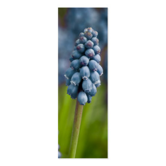 Grape Hyacinth Bookmark Business Card Template