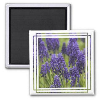 Grape Hyacinth Bulbs Magnet Magnet