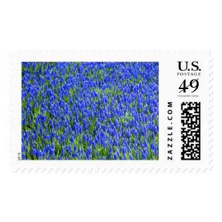 Grape Hyacinth Field Large Postage