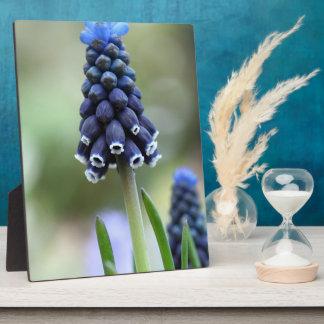 Grape Hyacinth Flower Plaque