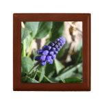 Grape Hyacinth Gift Box
