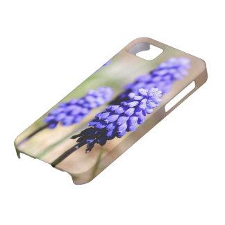 Grape Hyacinth iPhone 5 Case