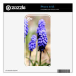 Grape Hyacinth iPhone Skin Skins For The iPhone 4S