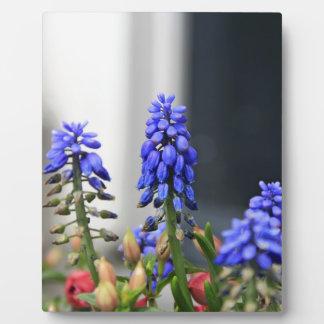 grape hyacinth photo plaques