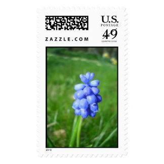 Grape Hyacinth Postage Stamp