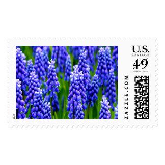 Grape Hyacinths Large Stamp