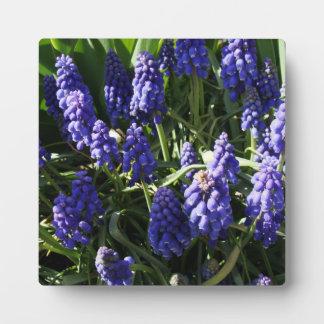 Grape Hyacinths Photo Plaques