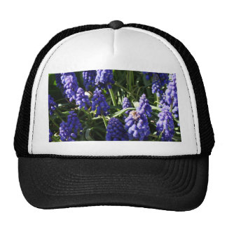 Grape Hyacinths Trucker Hat