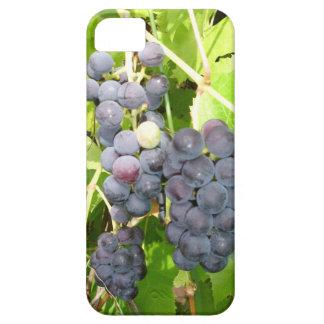 Grape iPhone5 Case