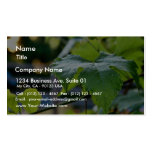 Grape Leaf Leaves Green Business Card Templates